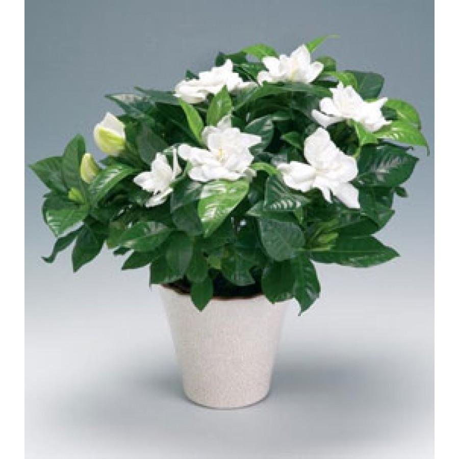 Комнатные цветы на г фото